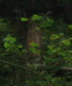 Mill Figure