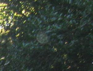 Ligon Orb 3